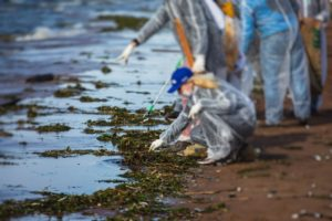 volunteers at work cleaning oil spill
